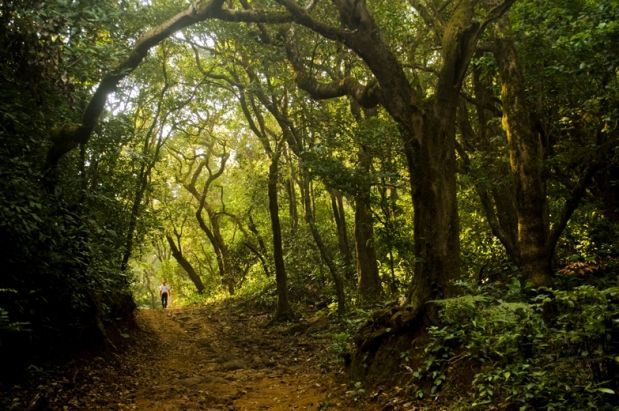 Dense forests of Western Ghats