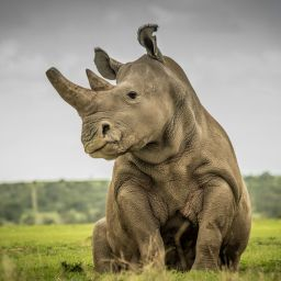 Home of the Indian One Horn Rhino; Complete Details of Kaziranga National Park