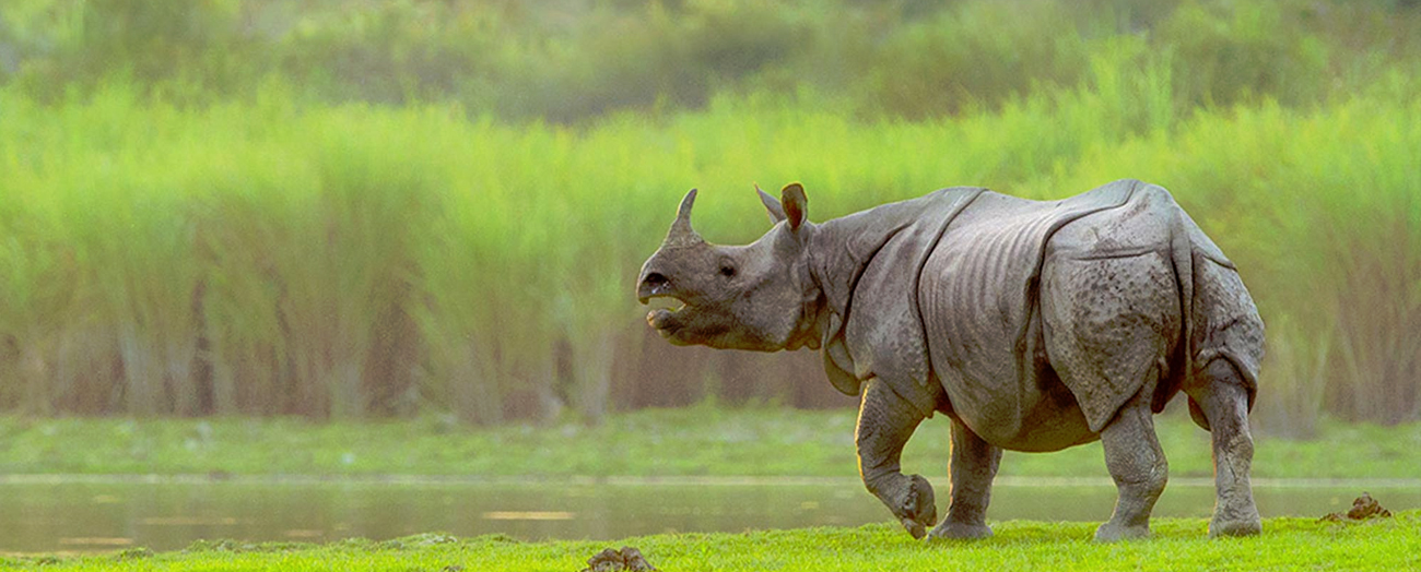 Home of the Indian One Horn Rhino