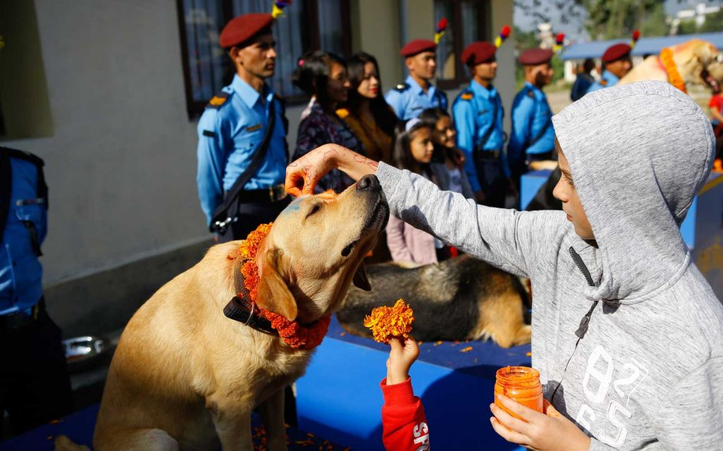 Dogs big day in Nepal